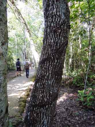 In Calakmul
